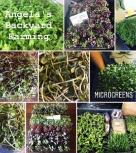 Various microgreens locally produced by Angela's Backyard Farming