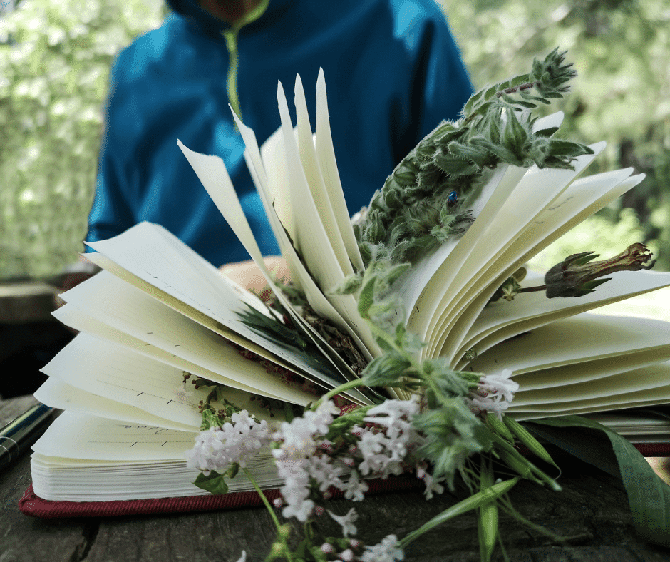 Open book with herbs in it