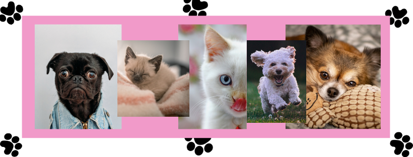 Collage of baby pets
