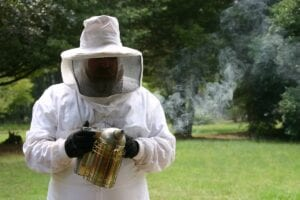 Taryn, a beekeeper from Flees Moving Bees, relocating bees in white beekeeper clothing