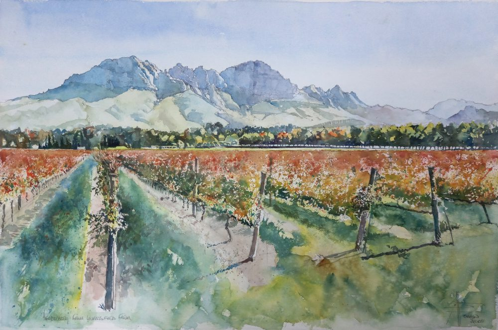 Painting of the vineyards at Lourensford Estate by SJQ Watercolour